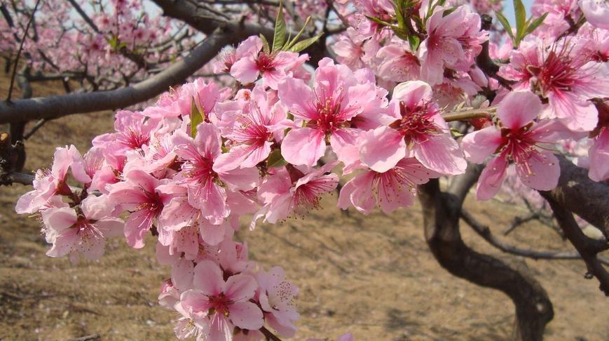 下图为桃花的部分结构